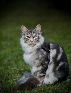 renconte coquine rencontre chaton chat adulte