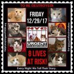 TO BE DESTROYED 12/29/17http://nyccats.urgentpodr.org/tbd-cats-page/