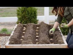 How to Grow Baby Potatoes - Plant Instructions Potato Gardening, Planting Potatoes, Garden Compost, Organic Gardening, How To Plant Potatoes, Grow Potatoes, Vegetable Gardening, Gardening For Beginners, Gardening Tips