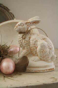 Special bunny