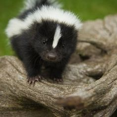 There's only one thing better than cute animals - cute baby animals. Check our list of the most adorable baby animals for that much needed 'awwww' in your day. Baby Animals Pictures, Cute Animal Pictures, Cute Baby Animals, Animals And Pets, Funny Animals, Wild Animals, Animal Babies, Party Animals, Funny Dogs
