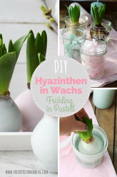 DIY: Hyacinths in wax - spring decoration in pastel- DIY: Hyazinthen in Wachs – Frühlingsdeko in Pastell We bring spring into the house! Hyacinths in wax – a small, simple DIY - Home Beach, Diy Para A Casa, Diy 2019, Diy Recycling, Diy Home Decor For Apartments, Diy Garden Projects, Diy Home Crafts, Wood Crafts, Paper Crafts