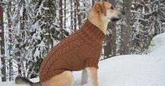 Koiran villapaita Novita Isoveli -langasta Dog Cat, Knitting, Cats, Friends, Gatos, Tricot, Breien, Stricken, Weaving