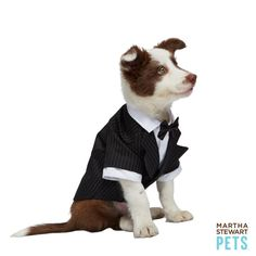Could he be any more dapper? Shop the #MarthaStewartPets Tuxedo only @petsmartcorp | #petwedding #dog #tuxedo
