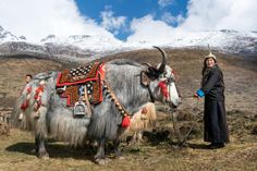 50 stunning photos of Bhutan that make you want to go - Lost with Purpose - 50 stunning photos of Bhutan that make you want to go – Lost with Purpose 50 breathtaking photos of Bhutan to make you pack your bags and go Bhutan, Tibet, Nepal, Places To Travel, Places To Visit, Thunder Dragon, Poster Photography, Places Around The World, Travel Posters
