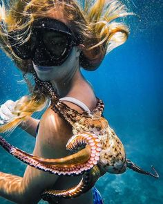 A cute octopus with a diver, Underwater Photos, Underwater Photography, Octopus Photography, Baby Animals, Funny Animals, Cute Animals, Surf, Cute Octopus, Sea World