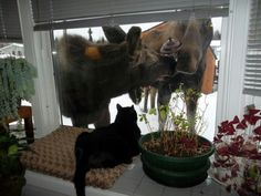 Now that's some photo - my kitty wouldn't have even stuck around this long.  The moose appear to be eating a lamppost!