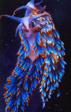 sea life - sea life photography - sea life underwater - sea life artwork - sea life watercolor sea l Beautiful Sea Creatures, Deep Sea Creatures, Animals Beautiful, Underwater Creatures, Underwater Life, Sea Slug, Beautiful Fish, Sea And Ocean, Sea World