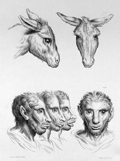 02-charles-le-brun-physiognomy-humans-evolved