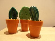 Trio of Pebble Cactus