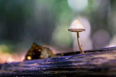 Un champignon blanc