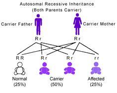 Autosomal Recessive Inheritance Pattern-genetic blindness