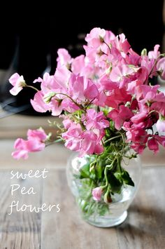 Sweet Pea Flowers | Flickr - Photo Sharing!  These winter flowering annuals need to be feed twice a month with liquid fertiliser.
