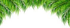 Palm Leaves Decor PNG Clip Art Image