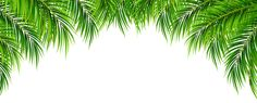 Palm Leaves Decor PNG Clip Art Image