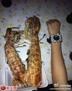 Mantis Shrimp Food Chain