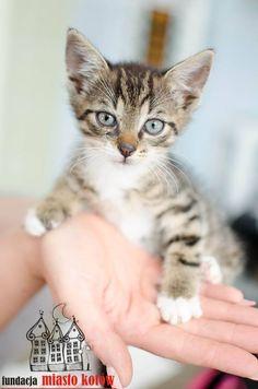 Chrupek is looking for a home ... #cute #cutecats #cats #caturday #kot #koty #neko #gato #katz #katzen #kittens #chat