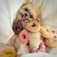 Marnie The Dog - ADOPT A SENIOR PET
