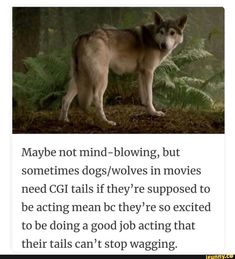 Picture memes — iFunny Maybe not mind-blowing, but sometimes dogs/wolves in movies need CGI tails if they're supposed to be acting mean bc they're so excited to be doing a good job acting that their tails can't stop wagging. – popular memes on th Funny Relatable Memes, Funny Facts, Odd Facts, Random Facts, Random Stuff, Cat Water Fountain, Wholesome Memes, Good Job, Best Actor