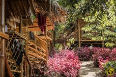 Koh Phi Phi - Ein Südseeparadies? - ichpackemeinenkoffer.at Thailand, Phi Phi Island, Airport Hotel, Beach, Plants, Island, The Beach, Beaches, Plant