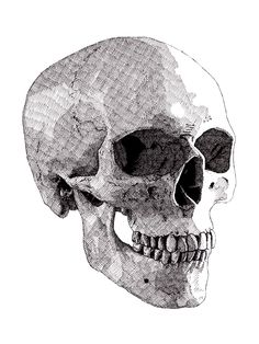 The finished drawing of my second skull (series of five) #rikreimert #skulls #crosshatching #art