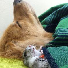 23-Bob-Dog.