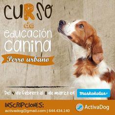 educacion-canina-valencia-maskokotas-activadog-perro-urbano