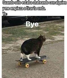 "Gatos Cool en Instagram: "". . . . #memesdegatoscool #gatoscool😸 #gatos_cool #gato #gatos #gatosdeldia #gatosdeinsta #instacats #intagram #reels #cat #catsofinstagram…"""