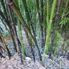 76 Best Bamboo Images Nature Scenery Asia