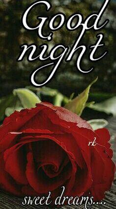Good Night Greetings, Good Night Wishes, Good Night Sweet Dreams, Good Night Moon, Good Night Image, Good Night Quotes, Good Nyt, Blessed Night, My Flower