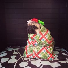 Hahahahahahaaaaa!  I wish this was under the tree for me on Christmas morning.  Maybe next year...