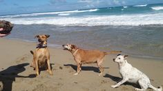 My Favorite Beach... :) - Summer Love Life Laughs