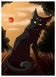 After the fact:Hollyleaf by SuwaneeEchoes on DeviantArt