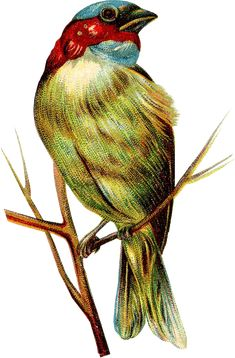 vintage-bird-march-gf.png (449×683)