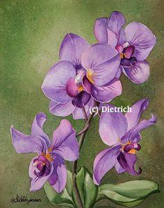 Nostalgie / Nostalgia (orchidee phalaenopsis)