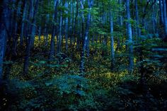 Fireflies in the Great Smoky Mountains  Photo by Gregory Crewdson
