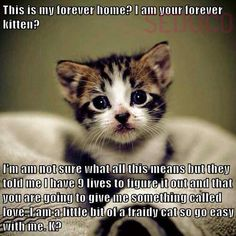 This is my forever home? I'm your forever kitten? This breaks my heart because every day in the USA so many kittens and cats, dogs and puppies are euthanized. Thank-you to all who adopt and foster and spay and neuter. Funny Animal Memes, Cute Funny Animals, Funny Animal Pictures, Cute Baby Animals, Cat Memes, Funny Cats, Animal Pics, Cute Cats And Kittens, I Love Cats