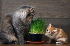 Quoi de plus adorable que des petits chatons pleins de vie? Aussi farceurs qu'intrépides, ils ne manquent pas de nous faire craquer… à l'instar de ces mamans chats!