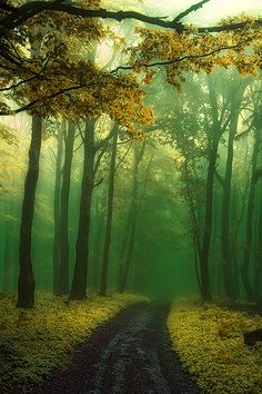 Forest Path, Slovakia photo via earth