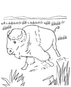 Wild Animal Coloring Page, free printable North American Bison coloring pages featuring wild Buffalo coloring page sheets. Flag Coloring Pages, Christmas Coloring Pages, Animal Coloring Pages, Printable Coloring Pages, Coloring Pages For Kids, Coloring Sheets, Coloring Books, Native American Design, Native American Crafts