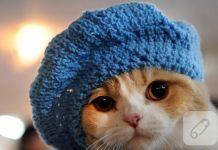 Şapkalı şirin kediler