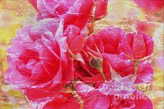 Shabby Chic Roses by Erica Hanel Digital Art, Shabby Chic, Roses, Wall Art, Prints, Flowers, Chic, Pink, Rose