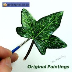 Original watercolor paintings by Paul Hopkinson. Botanical illustration of an ivy leaf completed in fine art detail with the tiny brush shown in the photo. Simple, elegant beauty. . #PaulHopkinson #TheDevonArtist #ivyleaf #leafpainting #botanicalwatercolor #botanicalart #artforsale #paintingsforsale #originalpainting #originalart #watercolor #watercolour #leafart #realism #illustration