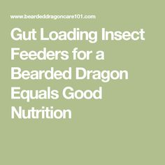Gut Loading Insect Feeders for a Bearded Dragon Equals Good Nutrition