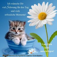 Greetings to the mornings and the day - # greetings # in the morning # open # on. Morning Coffee Funny, Good Morning Funny, Morning Humor, Easter Bunny Pictures, Funny Faces Pictures, Happy Birthday Wishes Quotes, Easter Quotes, German Quotes, Easter Wishes