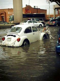 Dalmatian helps his owner push car during flash flood (PHOTO)