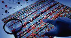 Un macroproyecto revela el mapa de los 'interruptores' del genoma   Ciencia   EL PAÍS