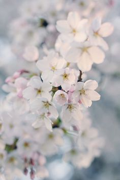 ~ delicate blossoms. I want to try capturing some photos like these next spring.