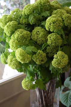 FLOWER: green viburnum. wonderful size, fluffy green texture. great for bouquets, centerpieces, possibly urns.