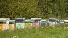 https://flic.kr/p/nrTRNm | ruches bretonnes / breton painted wooden beehives | Trégon, Côtes d'Armor, Bretagne